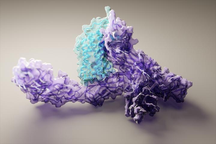 现在所有人都可以进行准确的蛋白质结构预测