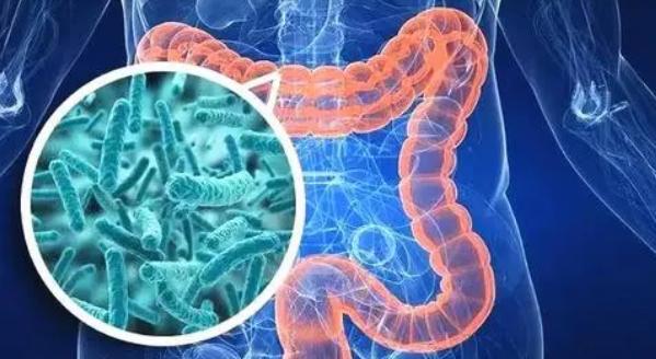 生活在肠道中的真菌对健康和疾病可能同等重要