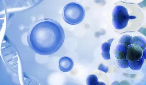 复杂的干细胞模型揭示了SARS-CoV-2进入大脑的潜在途径