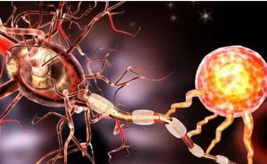 研究可能会显示为什么MS患者会发展为进行性残疾