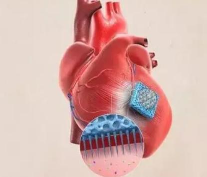 动态心脏模型模拟血流动力学负荷 推进工程心脏组织技术