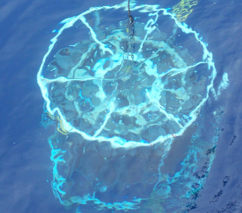 微小的生物揭示了海洋营养物质