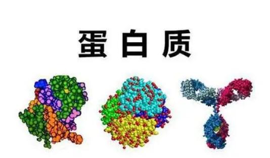 科学家鉴定出与最常见白血病形式相关的蛋白质标记物