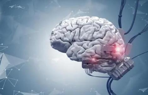 研究发现钙能精确地引导大脑中的血流