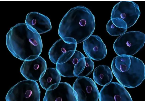 阿尔茨海默相关酶复合物扣紧以安全穿越细胞