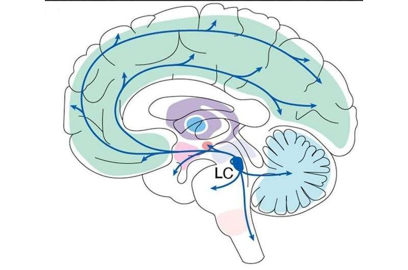 神经科学家认为大脑区域是学习的关键场所
