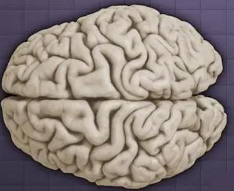 研究表明大脑的感觉良好化学信使可以被任意操纵