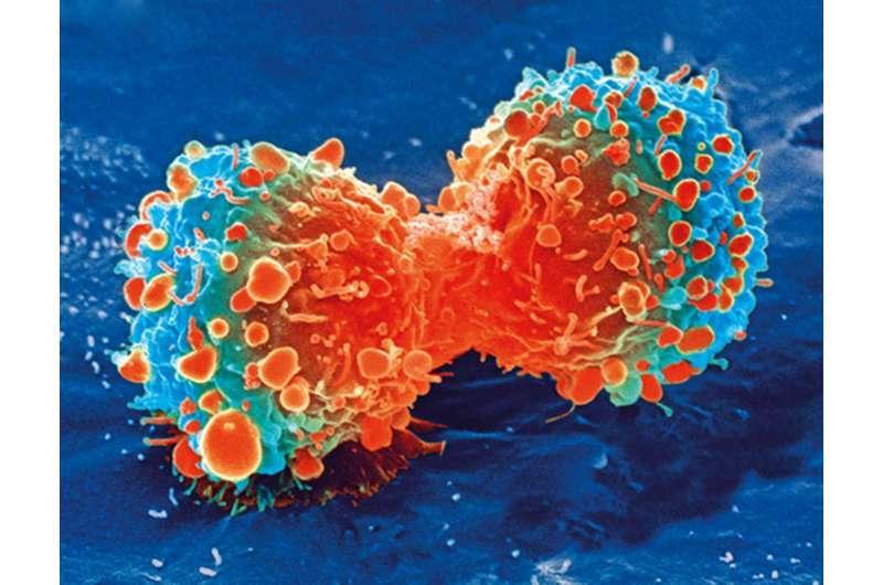 研究人员利用冷冻电子显微镜推进乳腺癌 卵巢癌研究