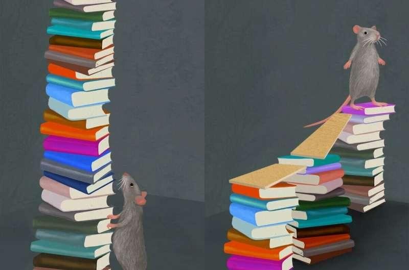 更长的学习事件间隔可以改善记忆并导致大脑中更强大的激活模式