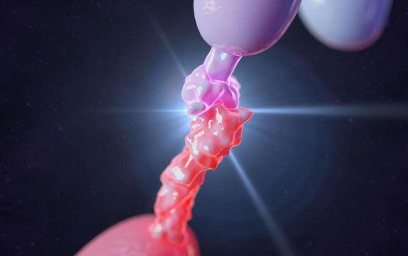 程序性细胞死亡配体是关键的免疫系统分子