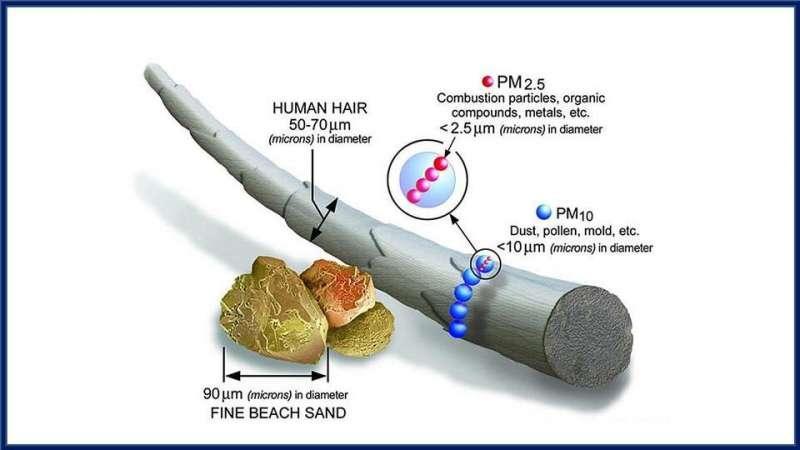 研究人员展示空气污染如何导致慢性鼻窦炎