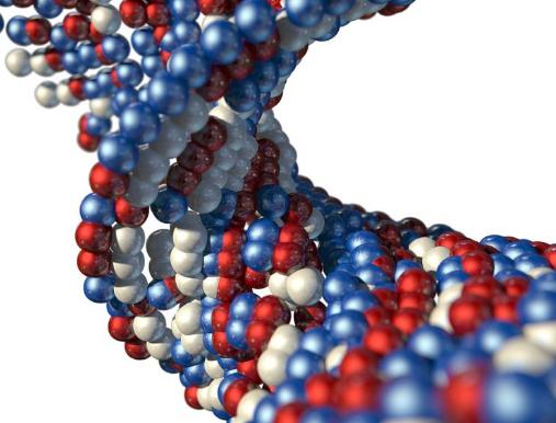 研究为线粒体融合蛋白2在细胞能量代谢中的功能提供了新的认识