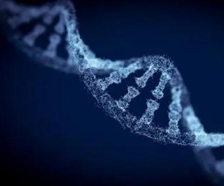 研究揭示黑色素瘤DNA突变的来源