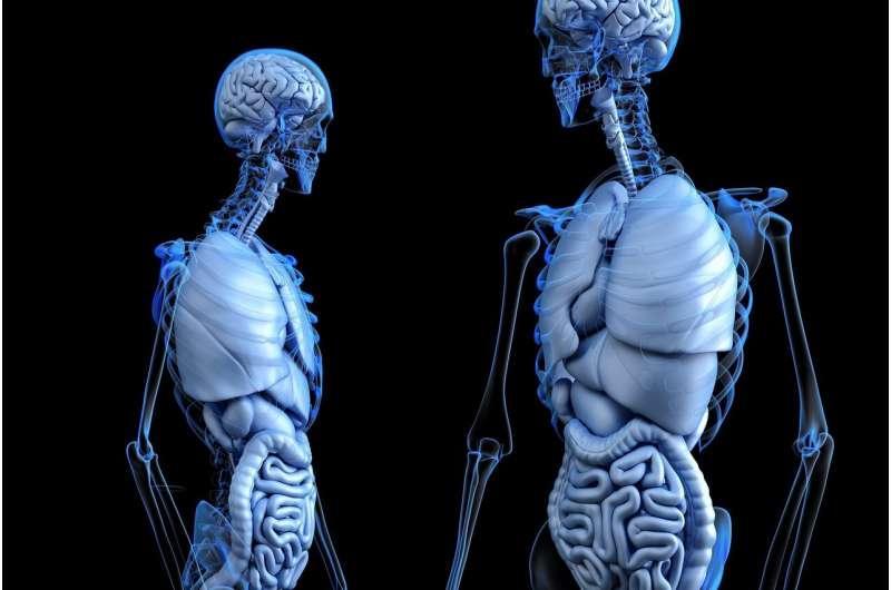 植入物显示出再生骨骼的巨大希望