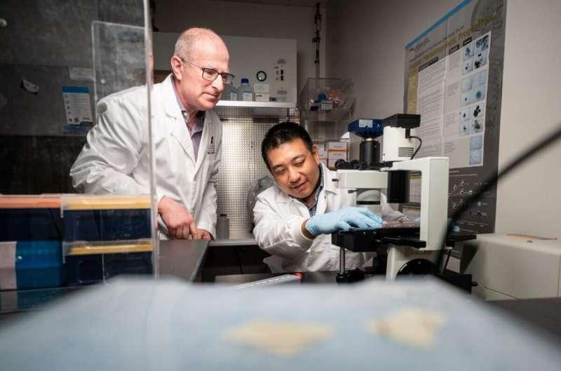 对红细胞机制的新见解为治疗镰状细胞病提供了线索
