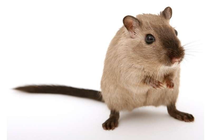 研究表明抗寄生虫药可减缓小鼠胰腺癌