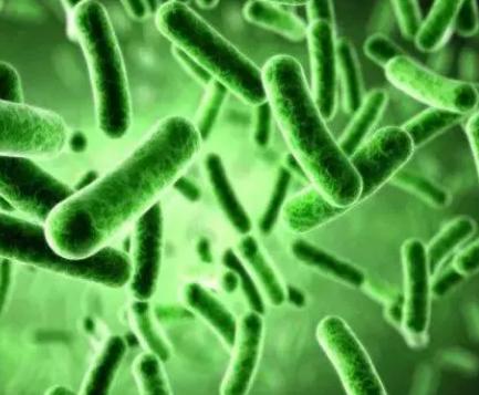 研究人员追踪微生物群细菌如何通过传播适应人类