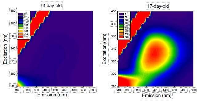 研究人员轻松检测老化后蛋白质发出的荧光