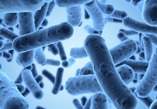 微生物具有逆转大脑衰老的潜力
