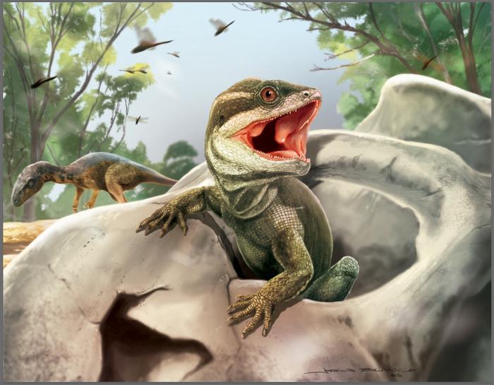 哈佛研究小组对化石的分析揭示了爬行动物的进化