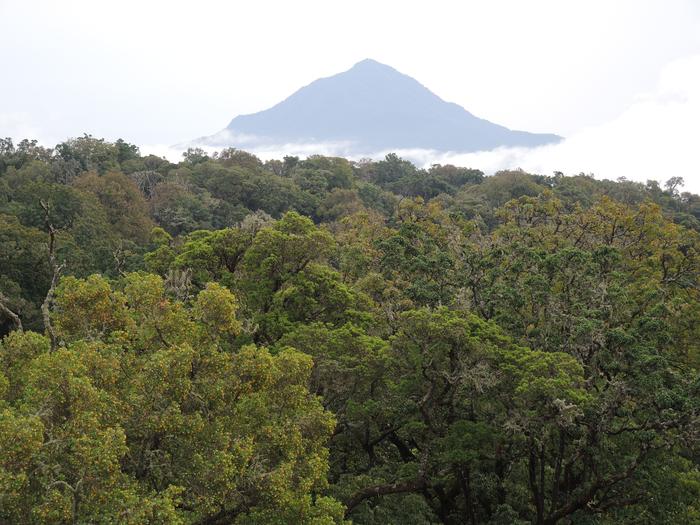 非洲山区的热带森林储存的碳比以前想象的要多