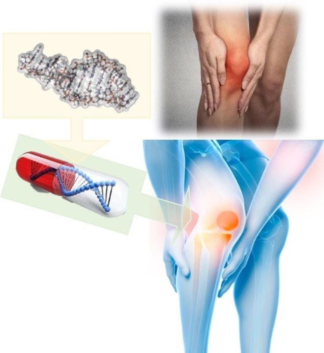RNA分子有可能帮助减缓骨关节炎患者的软骨退化