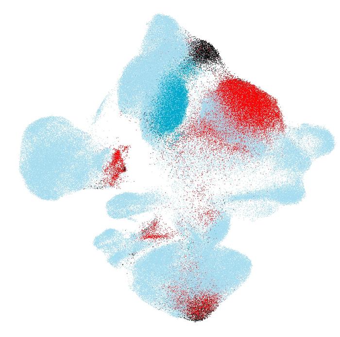 人工智能有助于发现单个患病细胞