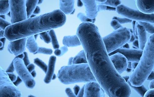 合成生物学使微生物能够锻炼肌肉