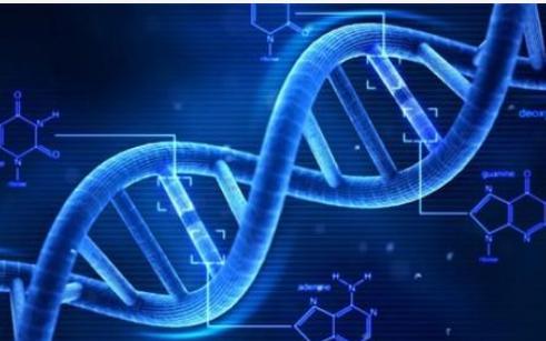 干细胞移植不会导致DNA发生变化