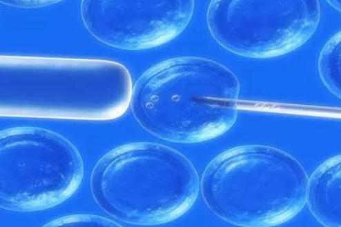科学家创造了模拟活细胞捕获处理和排出物质能力的人造细胞