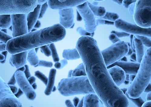 儿童的社会经济状况会影响消化道中的微生物