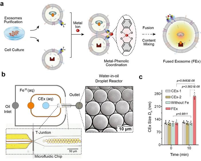 科学家探索人造细胞器的创造