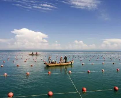 低氧水平对渔业和生态系统可能造成破坏性影响