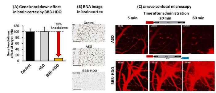 反义寡核苷酸疗法穿过血脑屏障