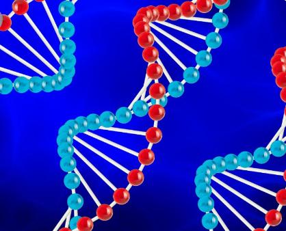 KLF4如何影响基因表达的新见解