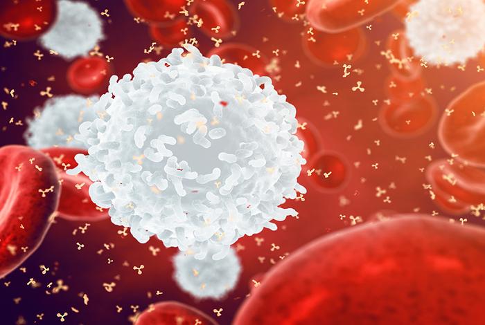 产生抗体的细胞发展背后的主要调节因子