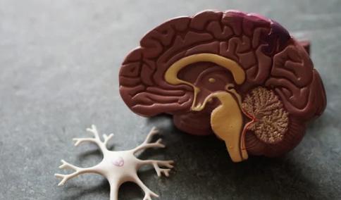 研究发现某些增强记忆力的药物靶点
