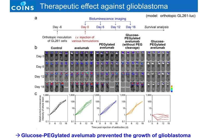 抗体递送技术为胶质母细胞瘤提供免疫疗法并抑制副作用