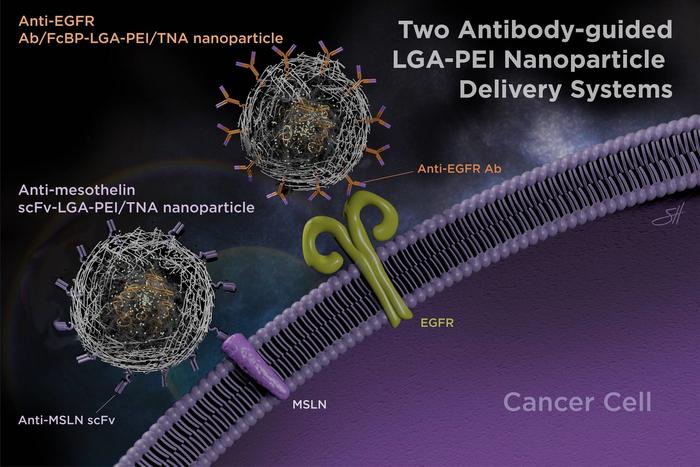 抗体改善了治疗性核酸的纳米粒子传递