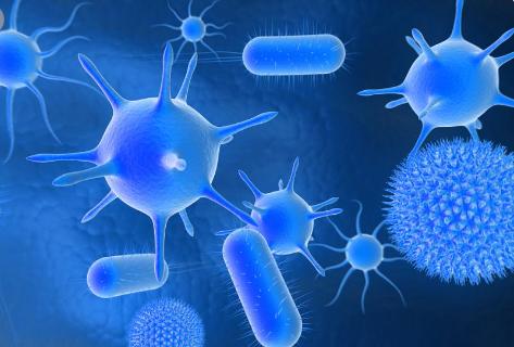 免疫系统保持肠道菌群平衡