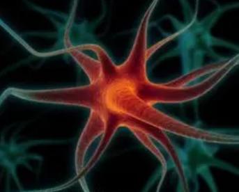 病毒感染可促进神经