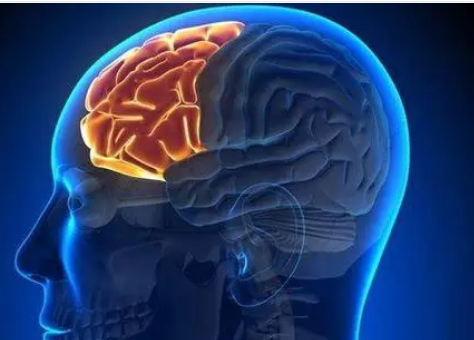 磁癫痫治疗可能是有吸引力的电替代疗法