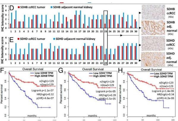 研究确定代谢酶在肾癌中的作用扩大