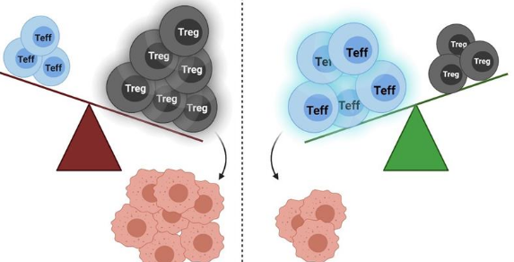 阻断一些T细胞可能会释放免疫系统的全部力量对抗癌症