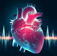 心脏细胞蛋白可能是预防心力衰竭的关键