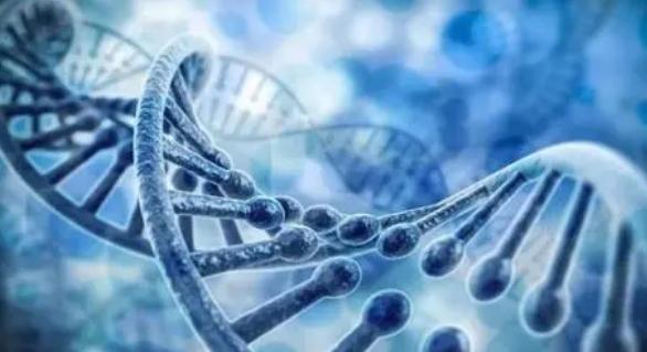 罗格斯大学的研究人员在步行模式中发现与遗传疾病的联系