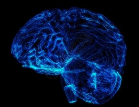 NIH 将资助研究大脑和脂肪组织如何交流