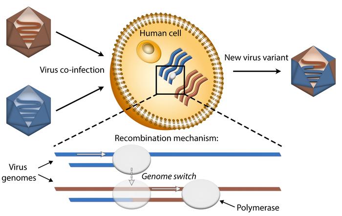 科学家揭示病毒变种出现的潜在机制