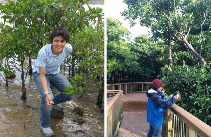 科学家揭示耐压红树林的遗传秘密