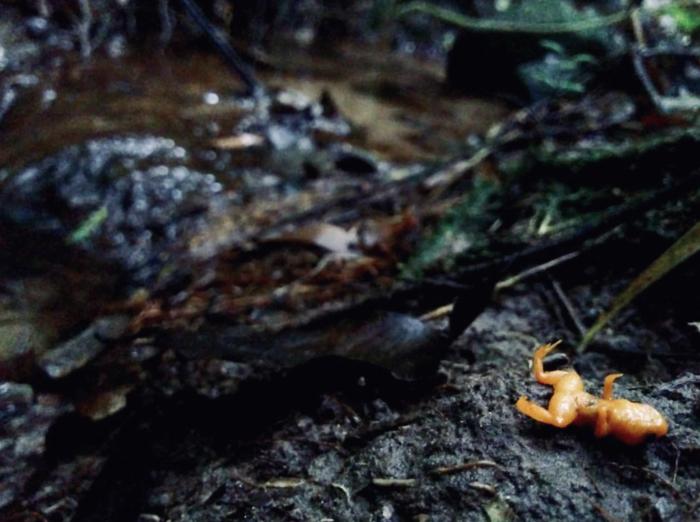 水生真菌已经将两栖动物从地图上抹去